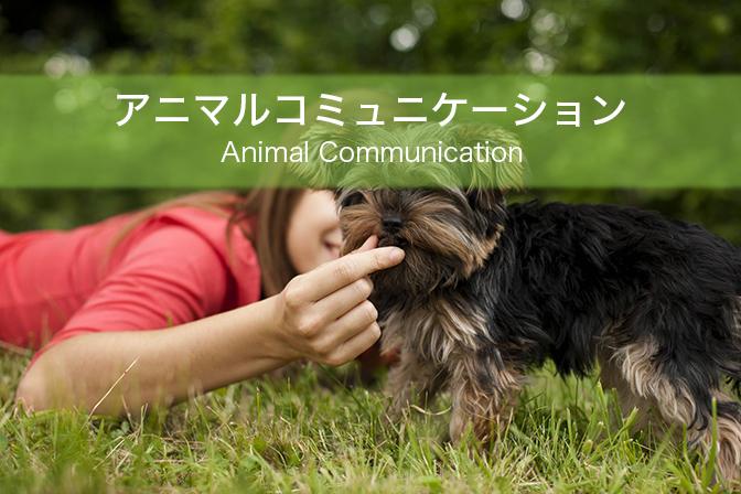 アニマルコミュニケーション